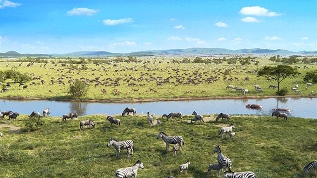草原上的各種動物