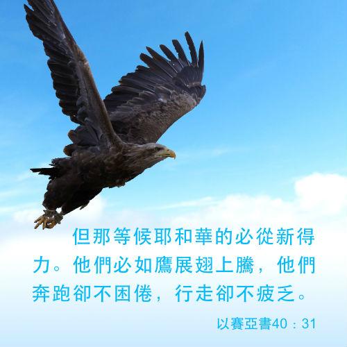 如鷹展翅 聖經金句圖片