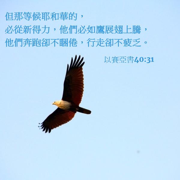 如鷹展翅飛騰