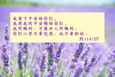 平安-聖經金句