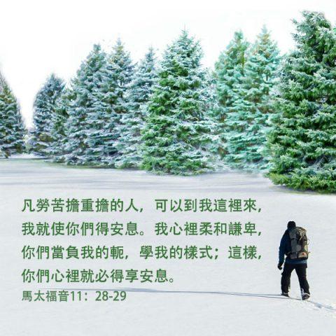 聖經卡片,松柏樹,基督徒