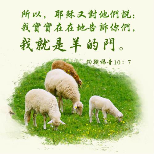 耶穌 羊 約翰福音