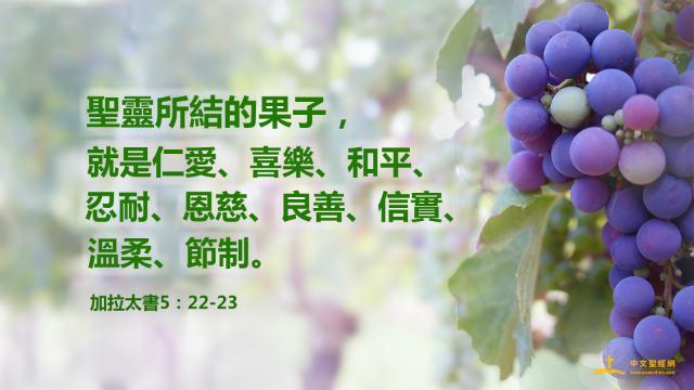 聖經金句 聖靈 祈禱 信心 葡萄