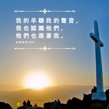 神的羊聽神的聲音 -聖經金句圖片