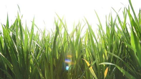 尖毛草的生長帶給我了啟發