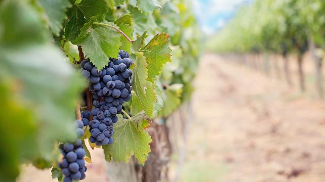葡萄園, 葡萄園工人的比喻