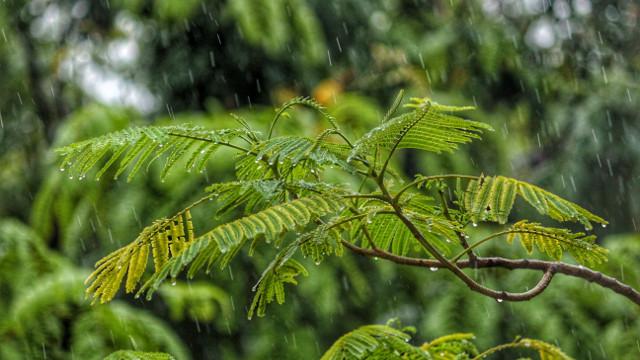 小雨,樹林,感悟