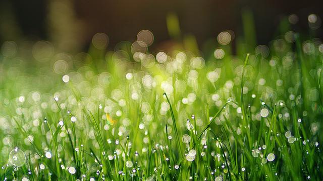 小草,雨露,綠色
