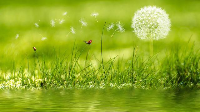 蒲公英,小草,蝴蝶,河水