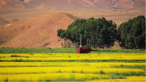 貨車,田間,風景
