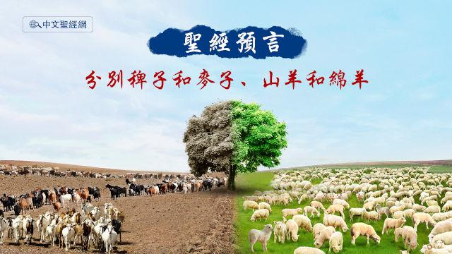聖經預言,稗子和麥子,山羊和綿羊