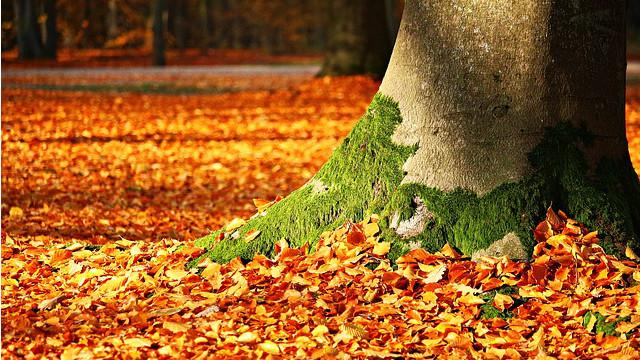 樹葉,樹根