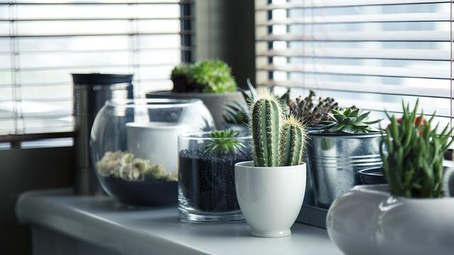 仙人掌,花盆,植物