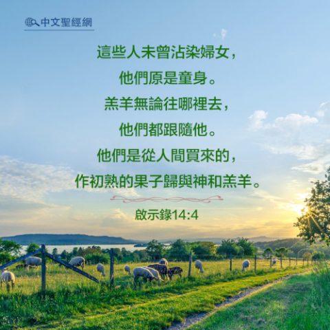 啟示錄14:4-靈修經文