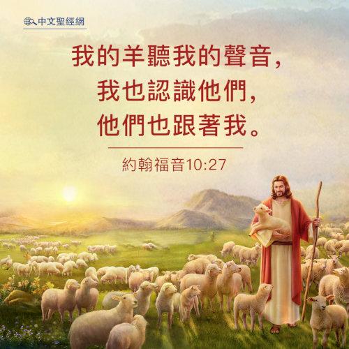 約翰福音10:27-靈修經文