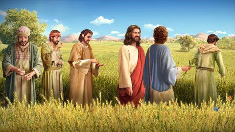 主耶穌,門徒,麥田