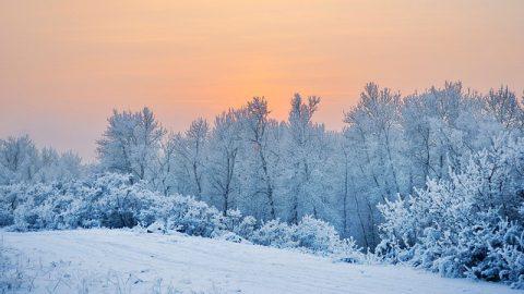 冬天,雪景