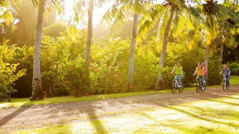 陽光,人,騎車