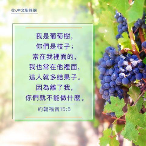 約翰福音15:5-靈修經文