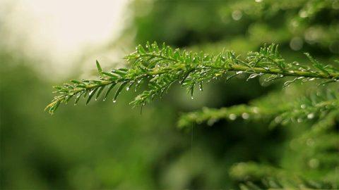 水珠,樹木