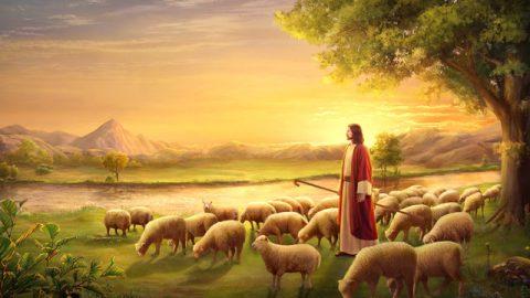 主耶穌,羊群