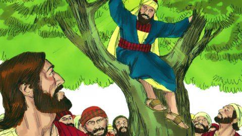 主耶穌對爬在桑樹上的撒該說話