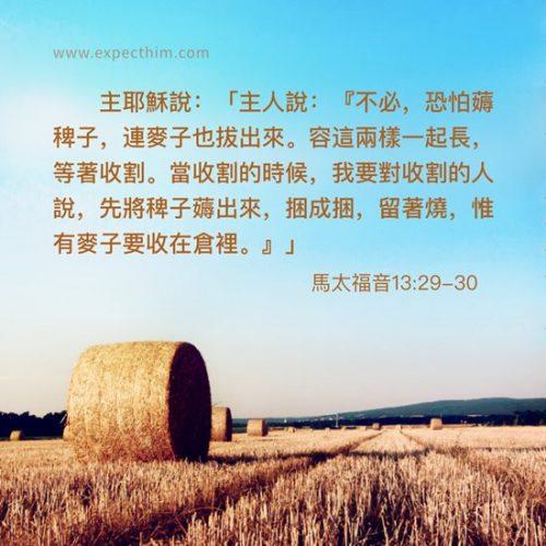 馬太福音13:29-30-靈修經文