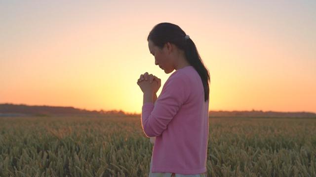 基督徒站在麥田邊向神獻上真心的禱告不管中共怎麼壓迫都堅決跟隨神走到底