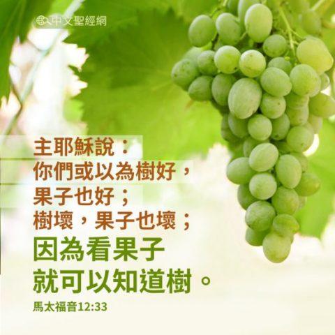 你們或以為樹好,果子也好;樹壞,果子也壞;因為看果子就可以知道樹。