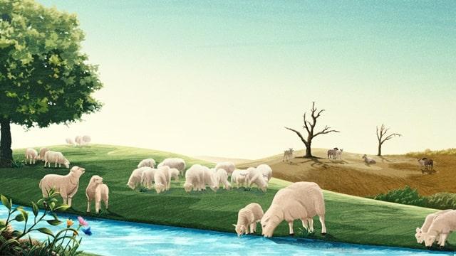 有草吃有水喝的羊和在沙漠中乾渴的的羊